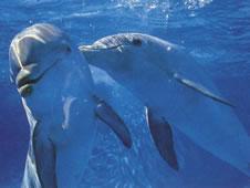dolphin-deaths-continue-along-gulf-coast